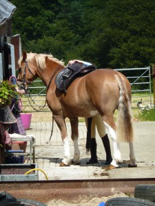 Tacking up for a hack out on a beautiful day!