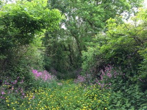 Wild flower walks from your cottage in the spring
