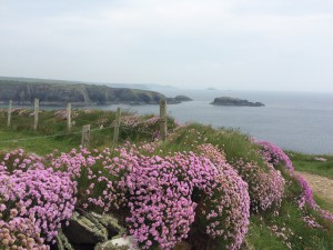 Pembrokeshire Coast Path has amazing spring flowers!
