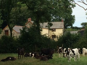 Longlands Farm set in beautiful Pembrokeshire countryside
