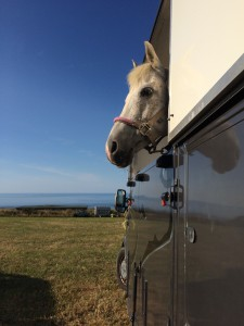 Bring you Horse and explore beautiful Pembrokeshire
