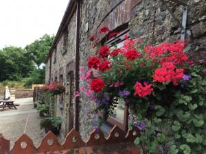 Cottage summer colour